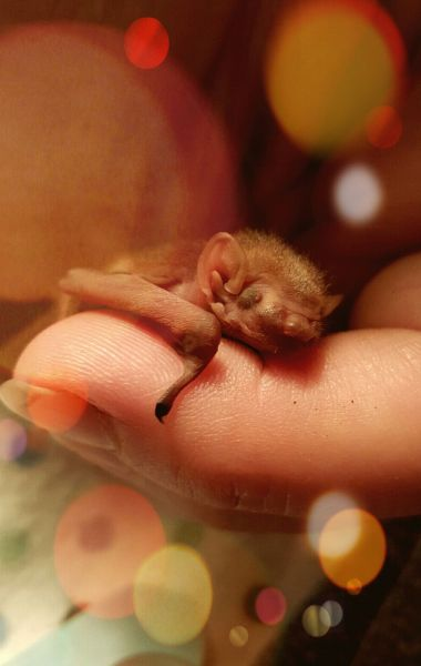 newborn red